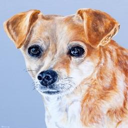 'Daisy Dog' © Alyson Sheldrake