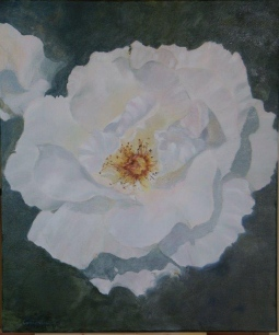'OPEN WHITE ROSE' © Caroline Wood