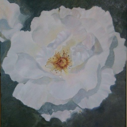 'OPEN WHITE ROSE' © Caroline Wood
