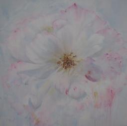 'PINK EDGED WHITE ROSE' © Caroline Wood