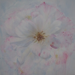 'PINK EDGED WHITE ROSE' © Caroline Wood