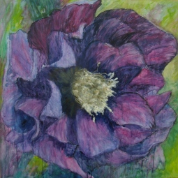 'PURPLE HELLEBORUS' © Caroline Wood