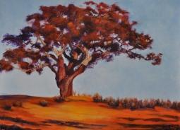 'THE CORK OAK TREE' © Caroline Wood