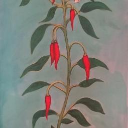 'Chilli Tree' © Sophie Wills