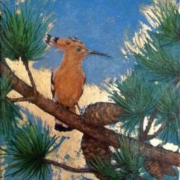 'Hoopoe Bird' © Sophie Wills