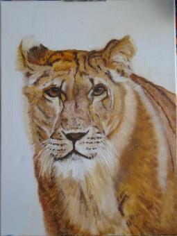 'Lion' © Sara Wooldridge