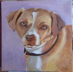 'Pet Dog' © Sara Wooldridge