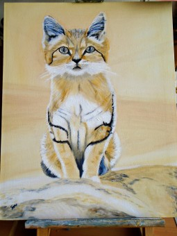 'Sand Cat' © Sara Wooldridge