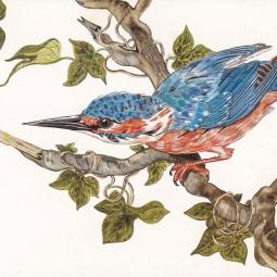 'Kingfisher' © Osmond K Mairs