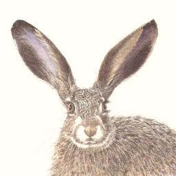 'Iberian Hare' © Gill Goode