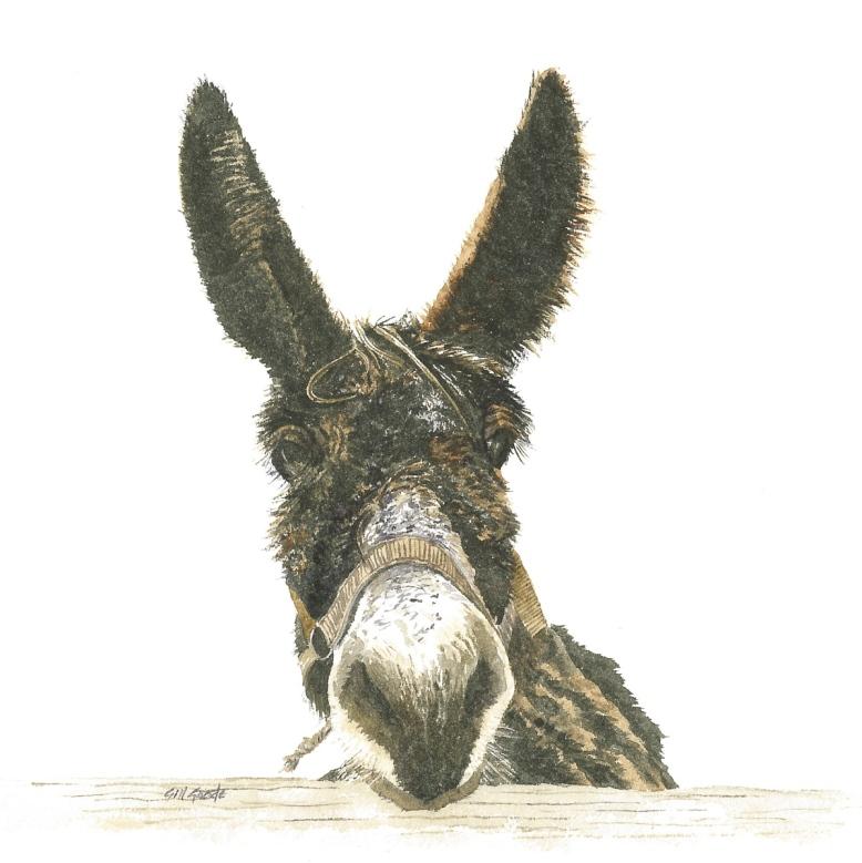 Miranda Donkey 2