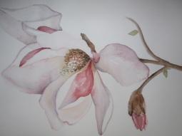 'Aquarel magnolia' © Mientje de Goeij-de Rooij