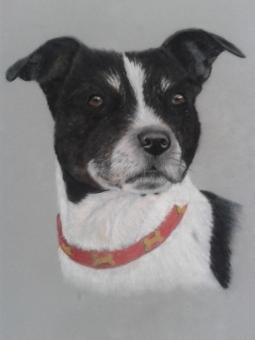 'Magi-collie_terrier' © Leanne Byrom