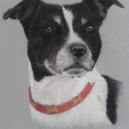 'Magi-collie_terrier' © Leanne Byrom