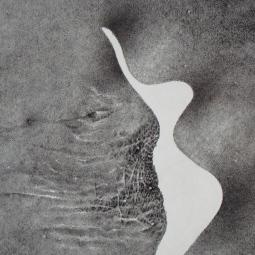 'rys1' © Kasia Wrona