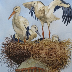 'Lagos Storks, soon to fly off for the summer!' © Malcolm Hyde