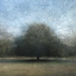 'Ginkelse-heide' © Frans Verschoor