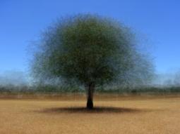 'lekunberri' © Frans Verschoor