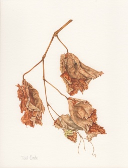 """Dried Vine 720"" © Toni Dade"