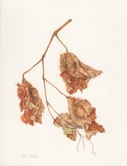 """Dried Vine 720"" © Toni Dade"