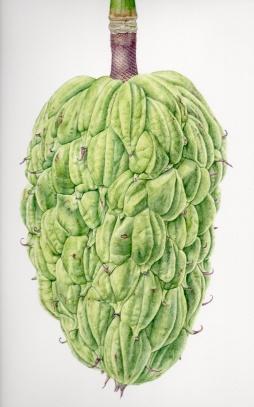 """Magnolia Seed Pod II"" © Toni Dade"