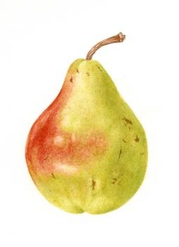 """""""Pear"""" © Toni Dade"""