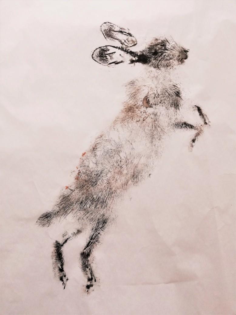 Roadkill rabbit R.RAMIREZ