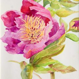 Pink Anemone Peony. Original watercolour. A4 framed © Jan Rowe