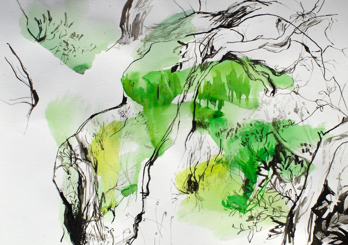 Cork trees 1