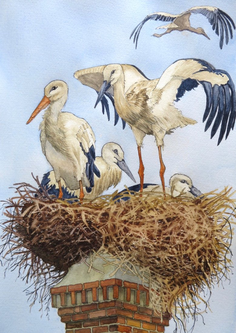 3. Lagos Storks, soon to fly off for the summer!