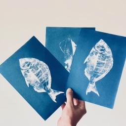 cyanotype fish I © LUZALBA
