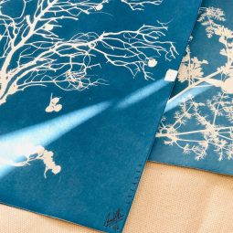 Cyanotype herbarium © LUZALBA